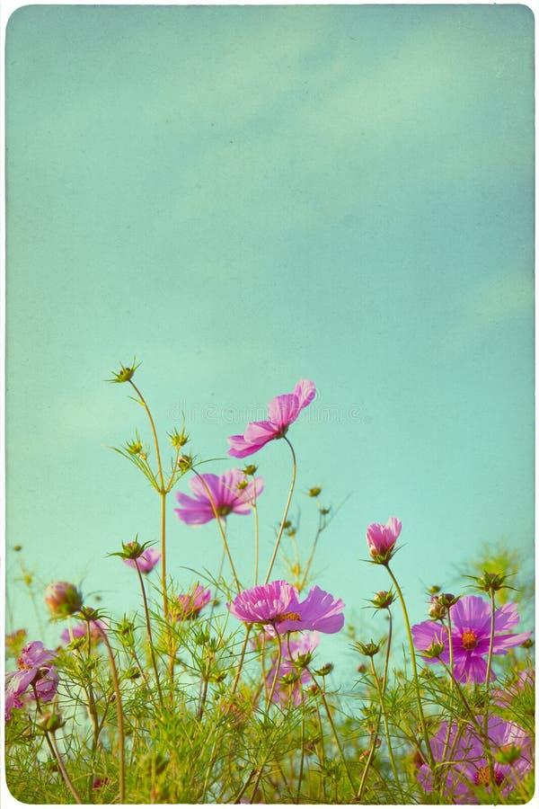 Fondo del prato del Wildflower fotografia stock