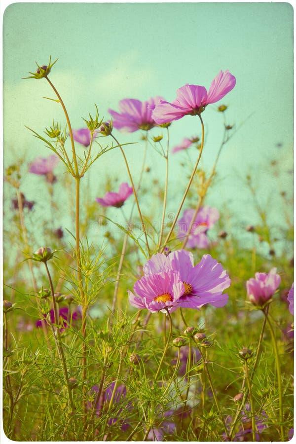 Fondo del prato del Wildflower fotografia stock libera da diritti