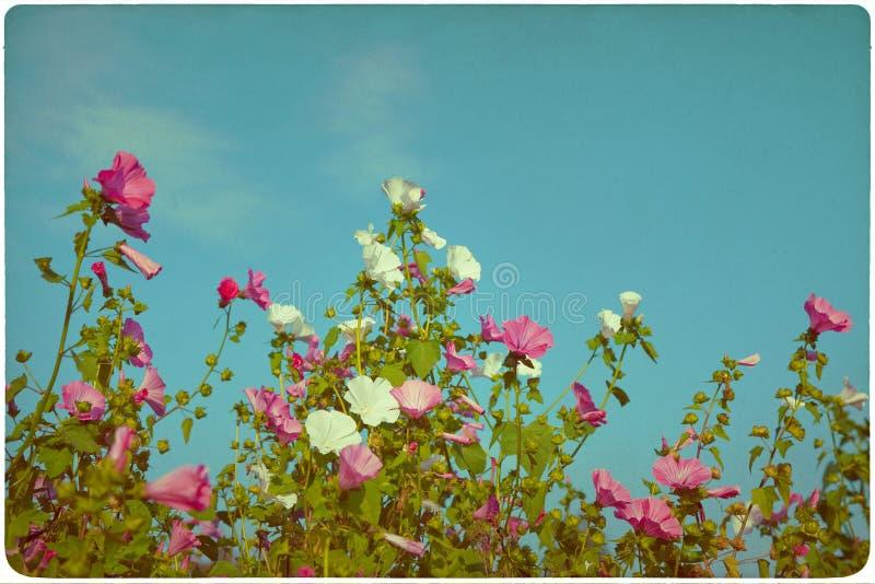 Fondo del prato del Wildflower immagini stock libere da diritti