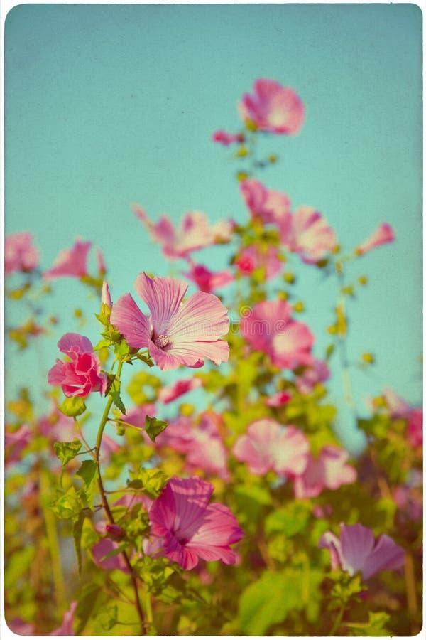Fondo del prato del Wildflower immagini stock