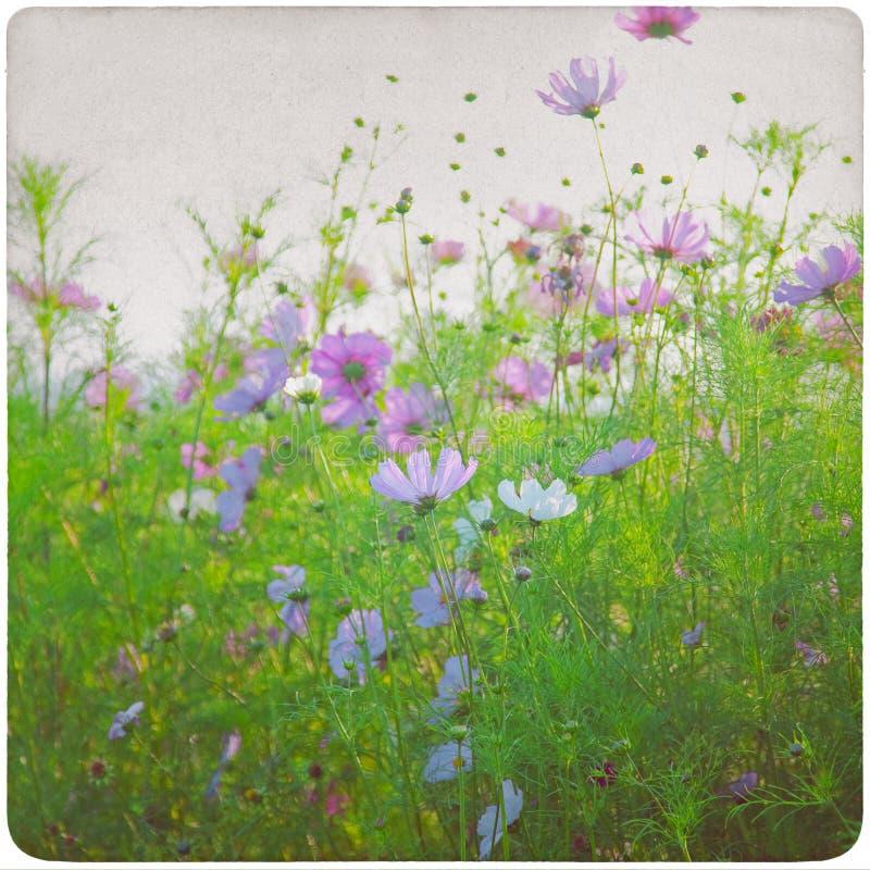 Fondo del prato del Wildflower fotografie stock libere da diritti