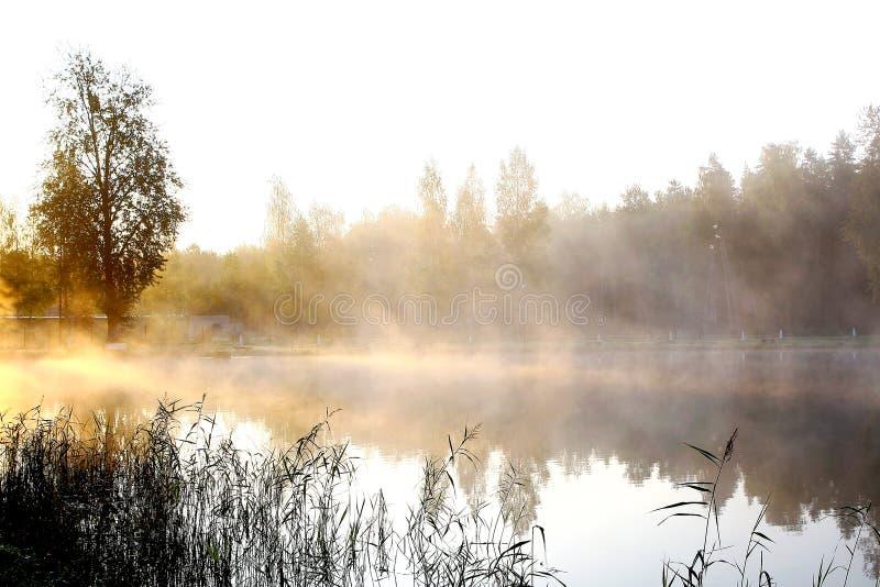 Fondo del río y del sol de la naturaleza imágenes de archivo libres de regalías
