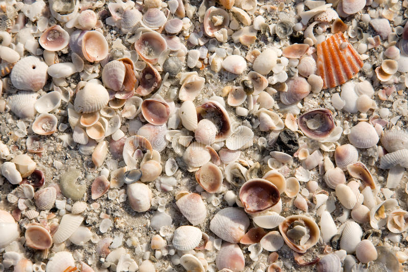 Fondo del Seashell imagen de archivo