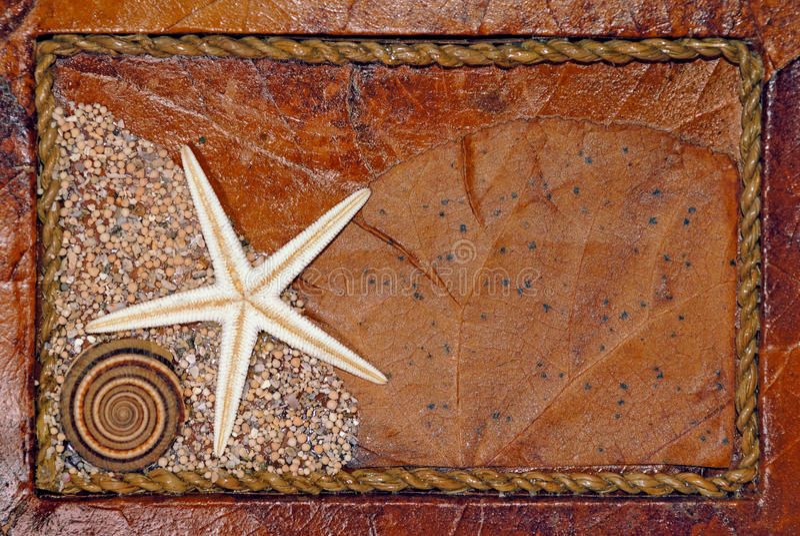 Fondo del Seashell imágenes de archivo libres de regalías