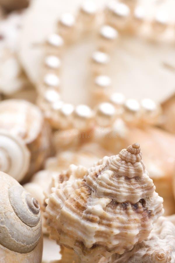 Fondo del Seashell con las perlas imagen de archivo libre de regalías