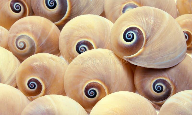 Fondo del shell imagenes de archivo