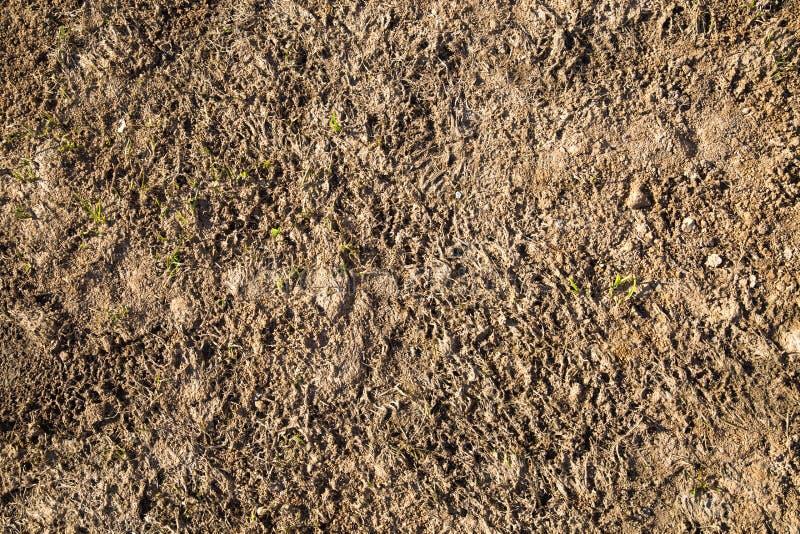 Fondo del suelo vegetal en primavera temprana imágenes de archivo libres de regalías