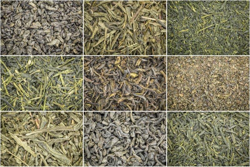 Fondo del té verde de las hojas intercambiables imagenes de archivo