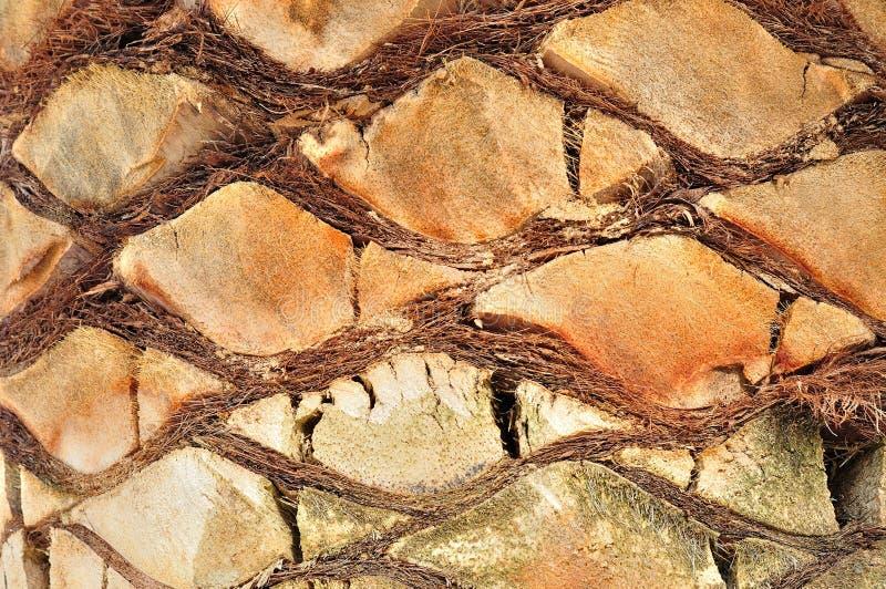 Fondo del tronco de palmera imágenes de archivo libres de regalías