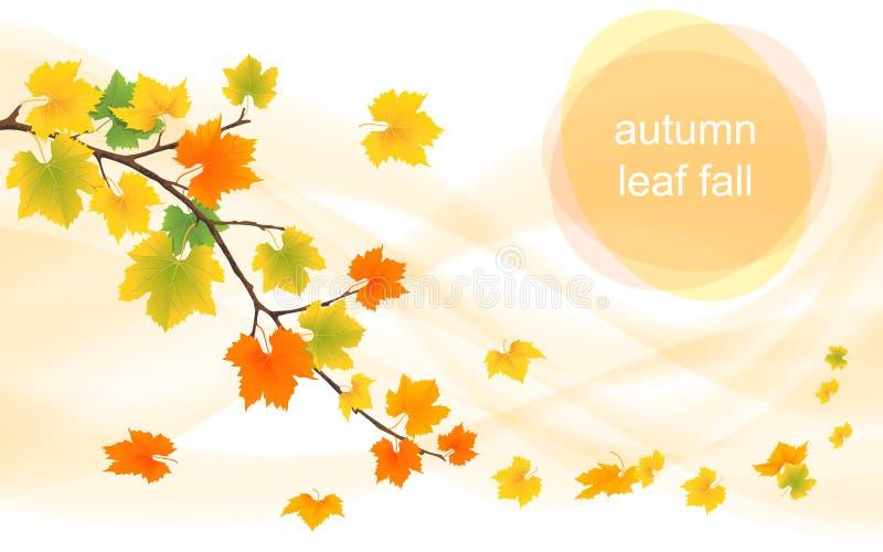 Fondo del vector del otoño con las hojas de hojas caducas libre illustration