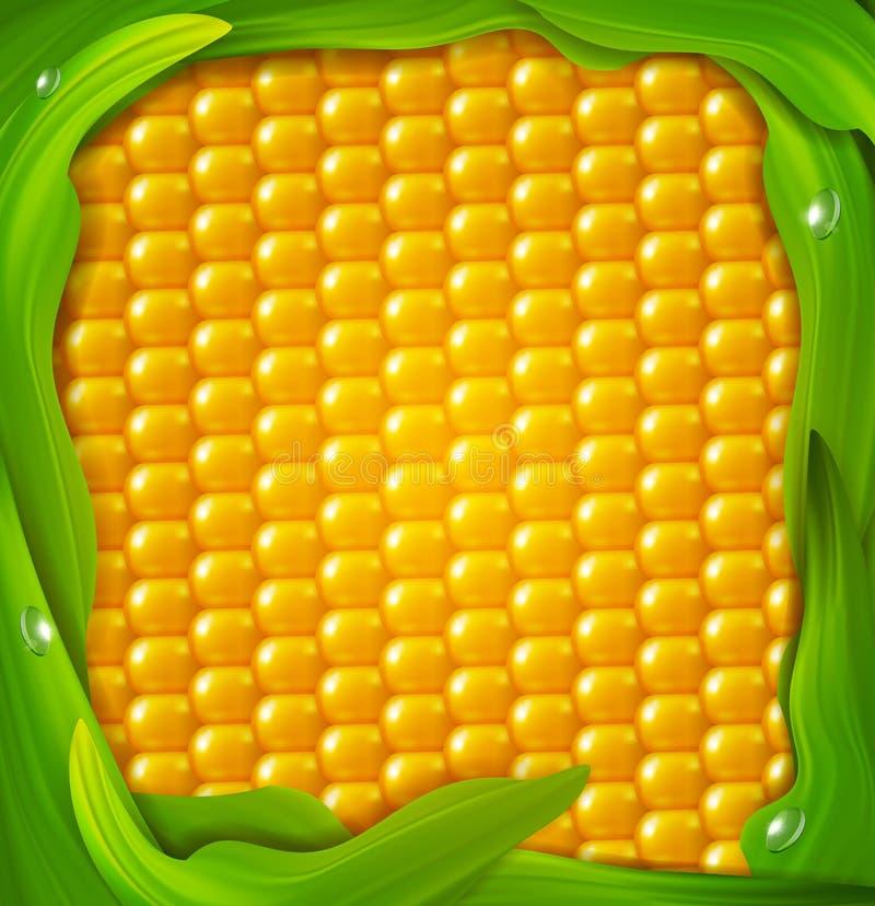Fondo del vector Maíz amarillo, hojas del verde alrededor stock de ilustración