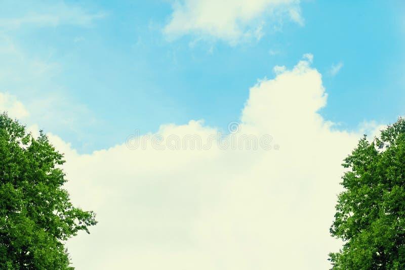 Fondo del verano, cielo azul con las nubes y árboles foto de archivo libre de regalías
