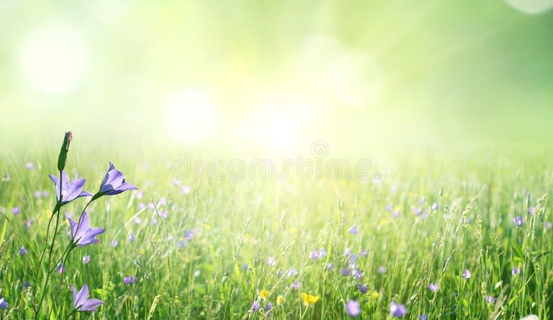 Fondo del verano con la hierba verde y las margaritas imagen de archivo libre de regalías