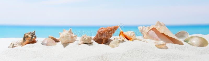 Fondo del verano de la bandera con la arena blanca Concha marina en la playa imagen de archivo