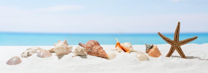 Fondo del verano de la bandera con la arena blanca Concha marina y estrellas de mar en la playa imagen de archivo