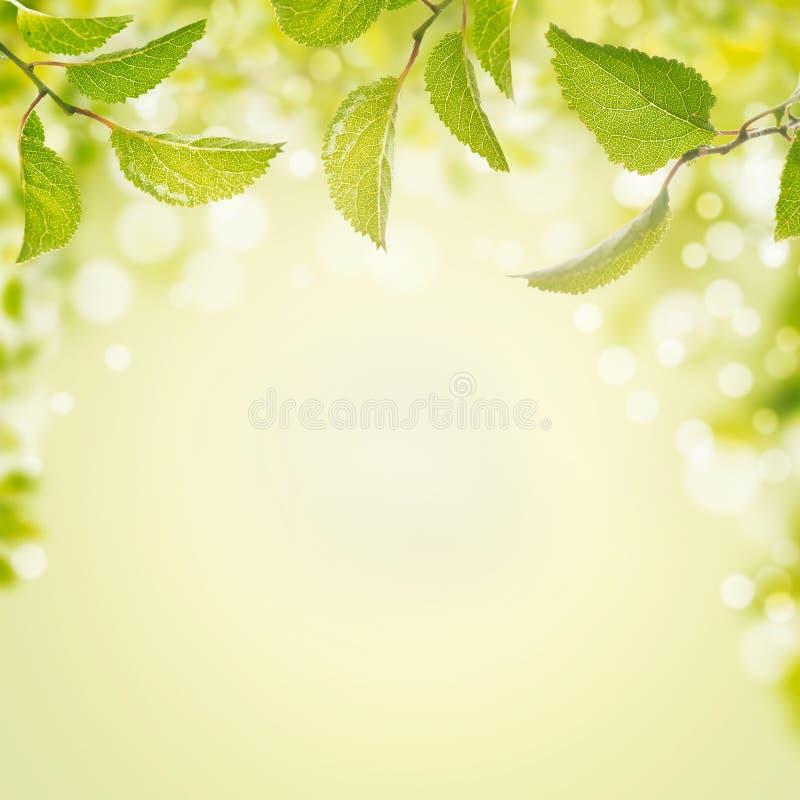 Fondo del verano de la primavera con las hojas, la luz y el bokeh verdes fotografía de archivo