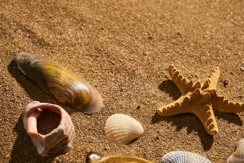 Fondo del verano - estrellas de mar y concha marina en la arena de la playa fotografía de archivo libre de regalías