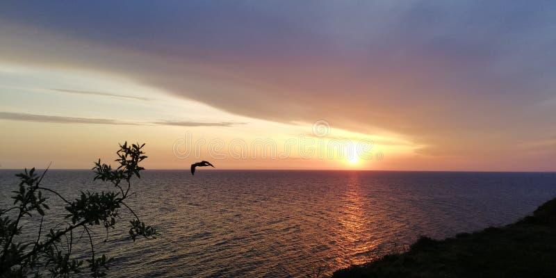 Fondo del verano Silueta de pájaros en el fondo del paisaje de igualación de la puesta del sol del mar foto de archivo