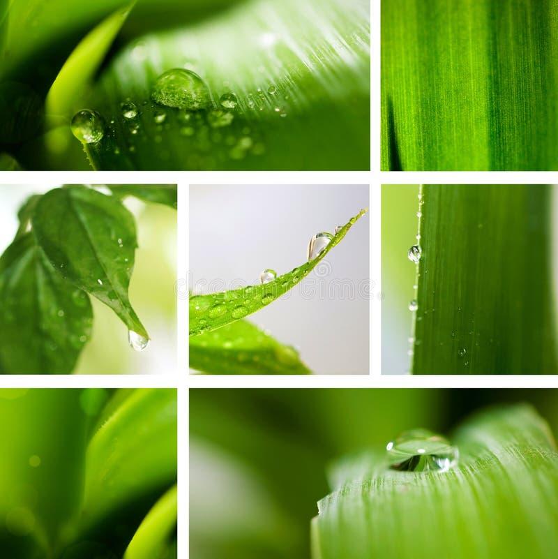 Fondo del verde de la naturaleza del collage. imagen de archivo libre de regalías