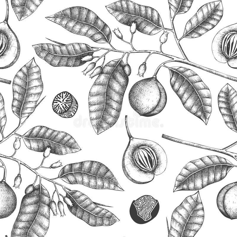Fondo del vintage con el ejemplo exhausto del árbol de nuez moscada moscada de la mano Diseño de instalaciones de la especia exha stock de ilustración