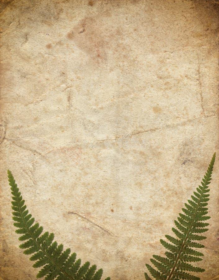 Fondo del vintage con el helecho seco de la planta en el papel viejo imagen de archivo