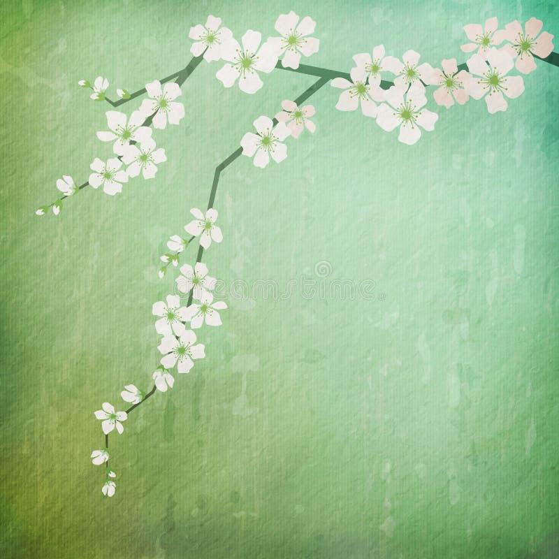 Fondo del vintage con la rama de las flores de cerezo stock de ilustración