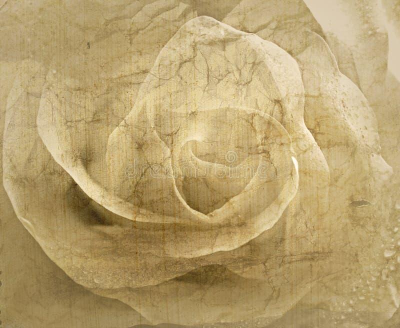 Fondo del vintage de Rose imagen de archivo libre de regalías