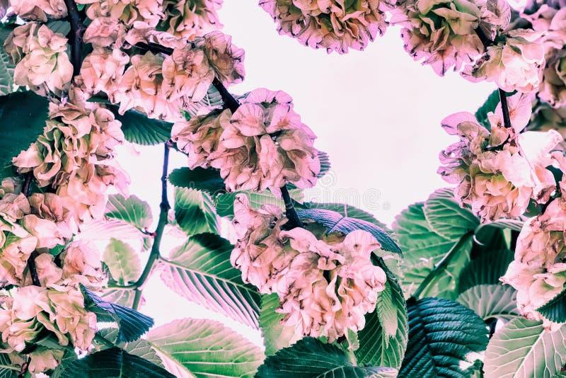 Fondo del vintage, marco de las ramas de florecimiento de la corona natural imágenes de archivo libres de regalías