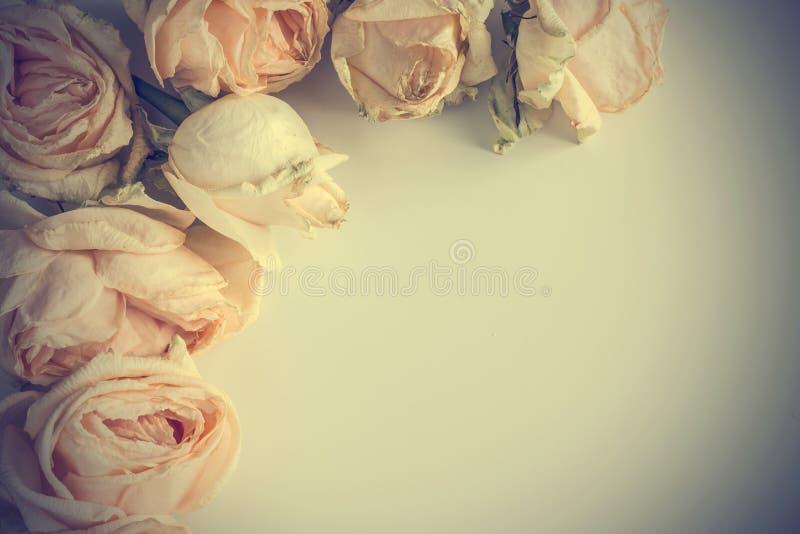 Fondo delicado con las rosas descoloradas en estilo del vintage foto de archivo libre de regalías