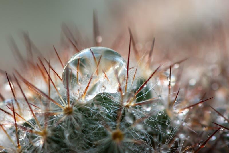 Fondo dell'acqua di gocce degli aghi del cactus fotografie stock libere da diritti
