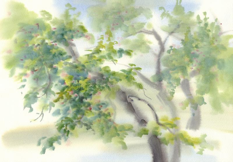 Fondo dell'acquerello di melo royalty illustrazione gratis