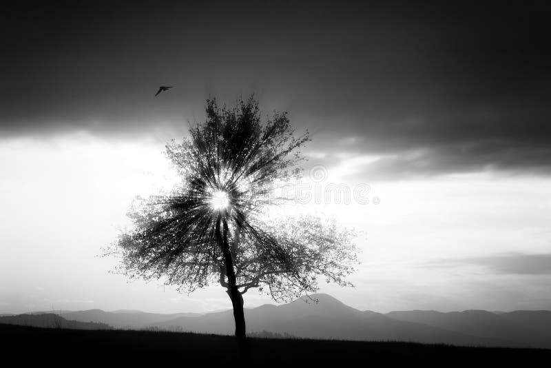 Fondo dell'albero di Bw fotografia stock