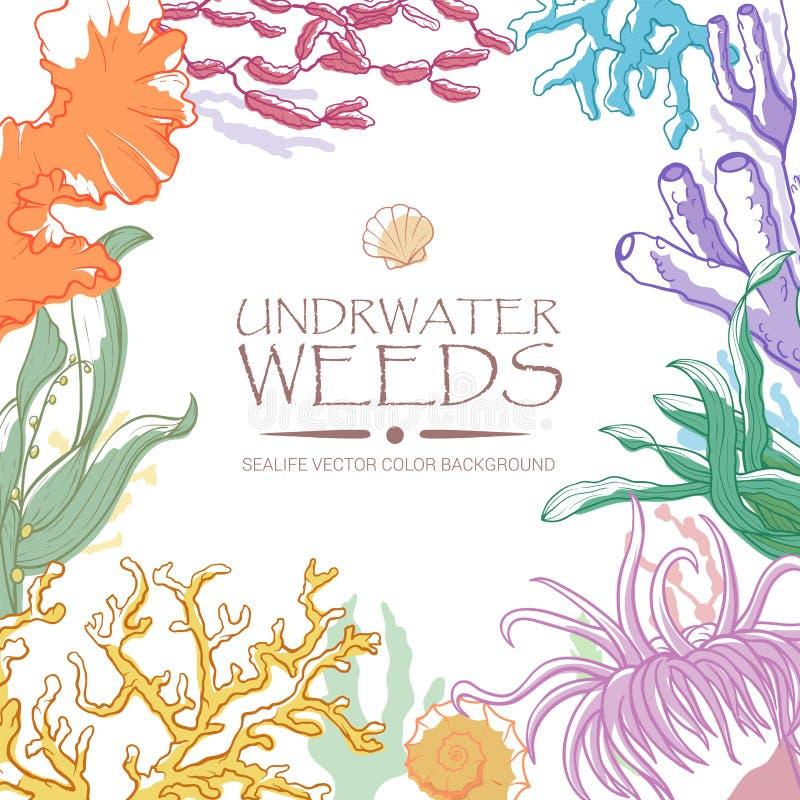 Fondo dell'alga e del corallo royalty illustrazione gratis