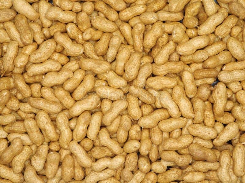 Fondo dell'arachide immagini stock libere da diritti