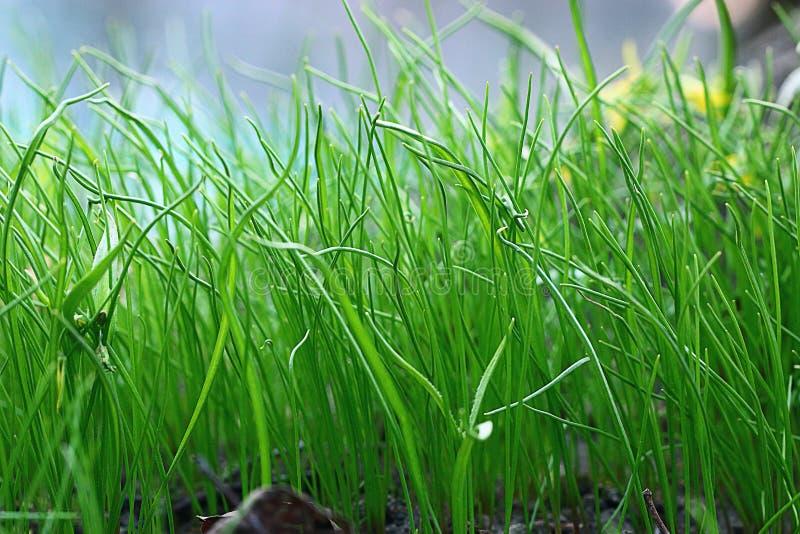 Download Fondo dell'erba verde immagine stock. Immagine di parco - 55362361
