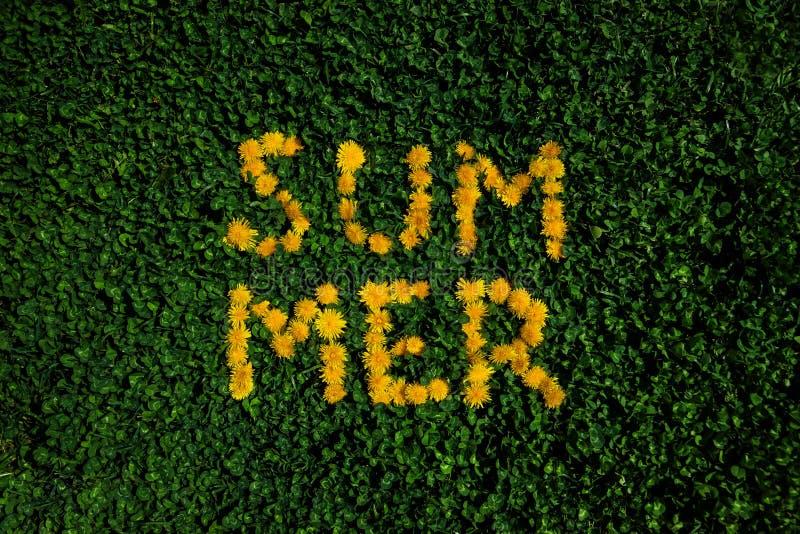 Fondo dell'erba verde con i denti di leone Iscrizione di estate fotografia stock libera da diritti