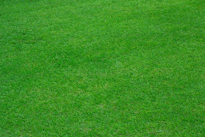 Fondo dell'erba verde del campo di calcio fotografia stock