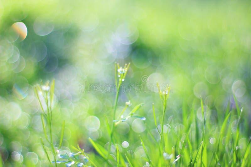 Fondo dell'erba verde - risparmiatore di schermo a colori - natura di così fine e bello fotografie stock