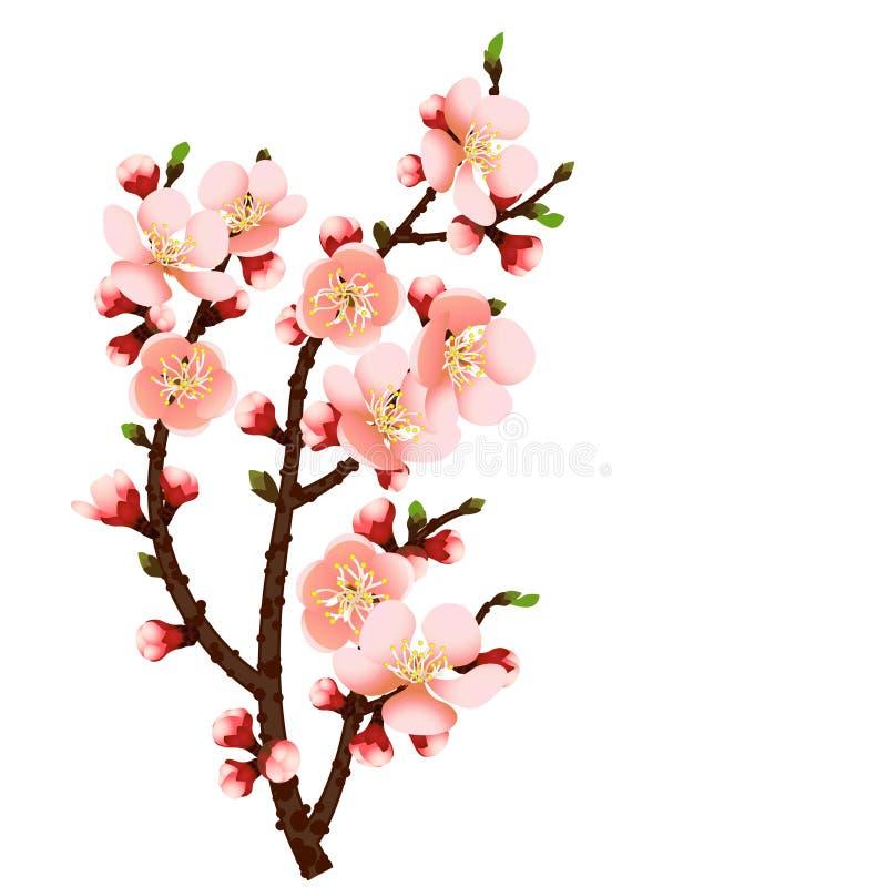 Fondo dell'estratto della filiale del fiore di ciliegia illustrazione di stock