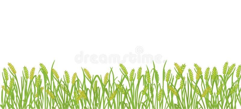 Fondo dell'insegna del giacimento della segale del cereale Erba agricola verde della pianta Illustrazione di vettore dell'orzo Gr illustrazione vettoriale