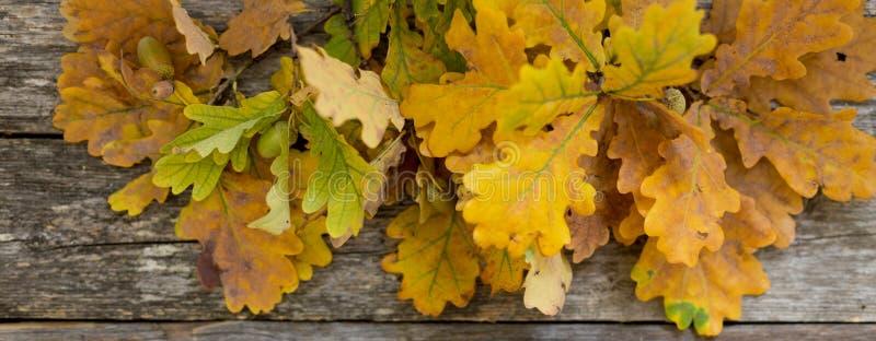 Fondo dell'insegna di autunno delle foglie della quercia di caduta sul bordo di legno, vista superiore fotografia stock libera da diritti