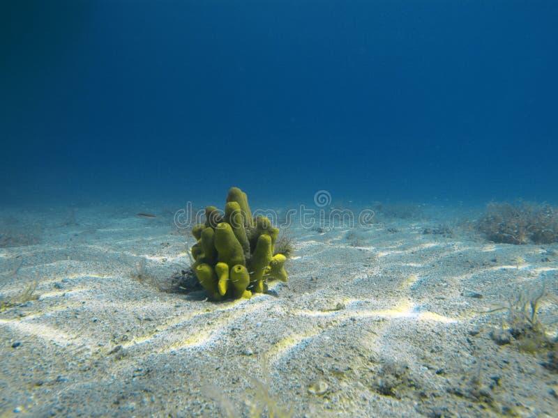 Fondo dell'oceano immagine stock