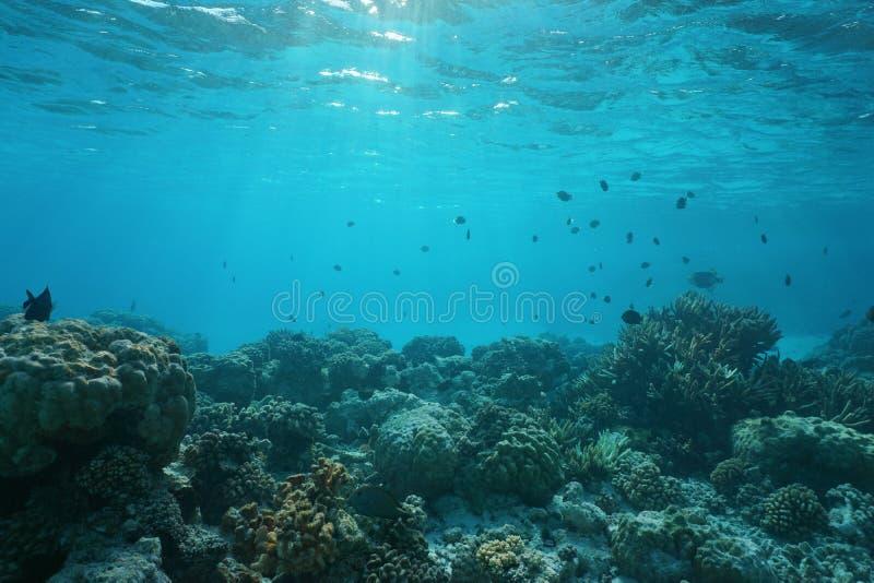 Fondo dell'oceano basso con la barriera corallina ed il pesce immagine stock