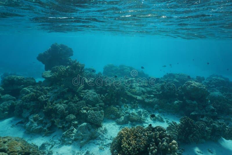 Fondo dell'oceano basso subacqueo della barriera corallina dell'oceano fotografia stock