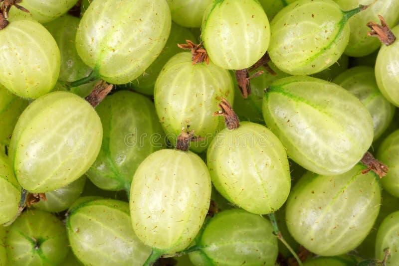 Fondo dell uva spina