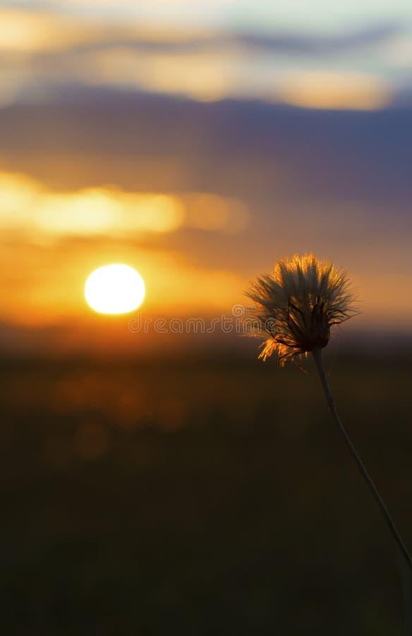 Fondo della carta da parati di tramonto fotografia stock libera da diritti