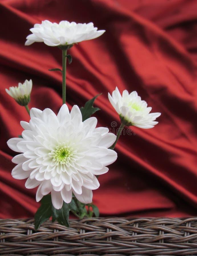 Fondo della carta di giorno di quattro biglietti di S. Valentino delle margherite bianche con raso rosso ed il canestro tessuto fotografie stock