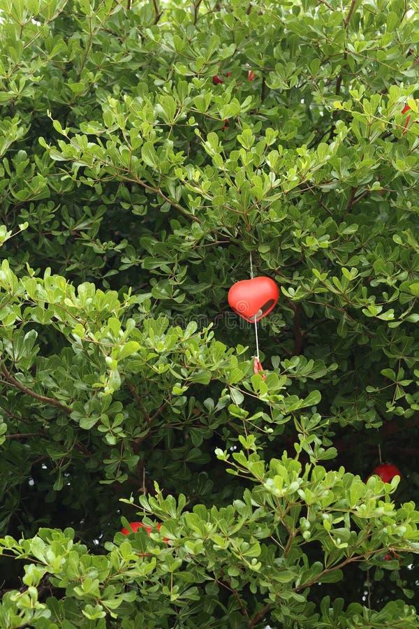 Fondo della cartolina d'auguri della natura - decorazioni rosse del cuore fotografia stock libera da diritti