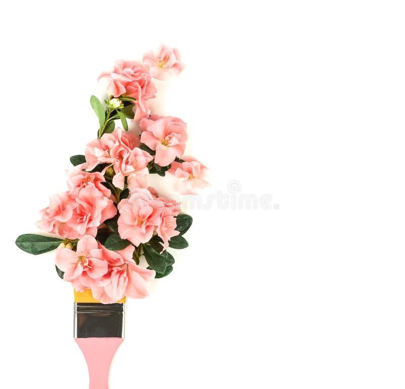 Fondo della composizione nei fiori Azalea rosa dei fiori sulla spazzola dell'artista su fondo bianco fotografia stock