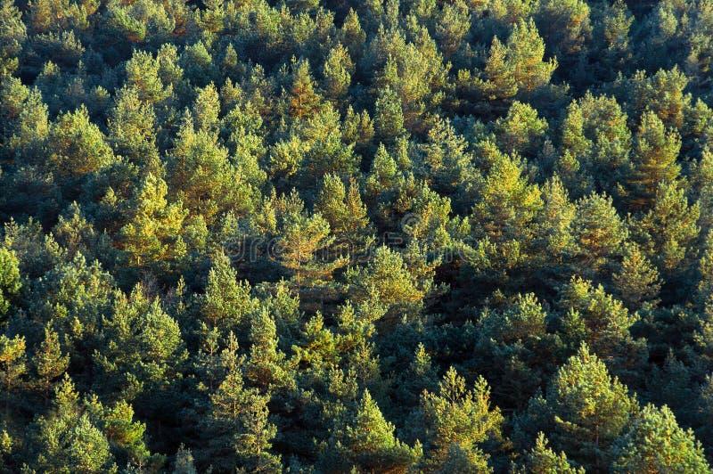 Fondo della foresta fotografia stock